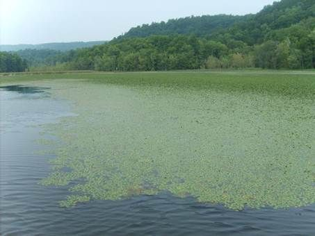 Workshop on Aquatic Invasive Species Identification, Spread Prevention, and Early Detection Announced