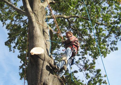 Central VA Tree Removal Lynchburg Virginia
