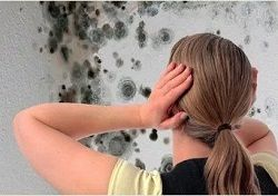Mold Removal Pros Baltimore MD Maryland