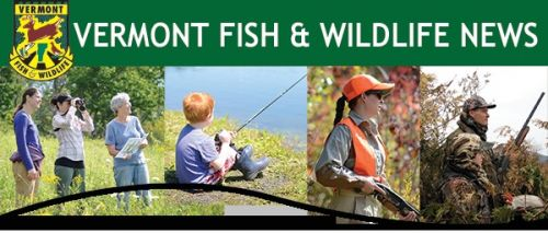 News from vt fish and wildlife for Vermont fish and wildlife
