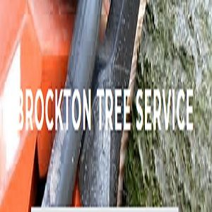 Brockton Tree Co brockton Massachusetts