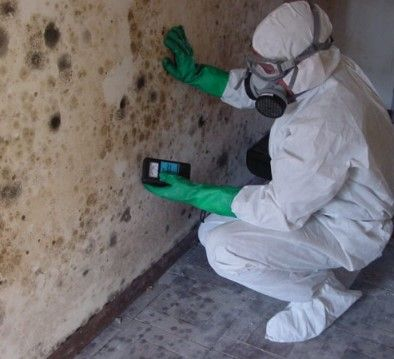 Local Mold Removal & Water damage service CA California