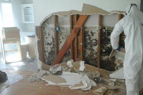 AAA Water damage and Mold Removal CA California