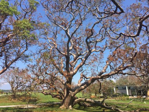 Williams Tree Services Vacaville California