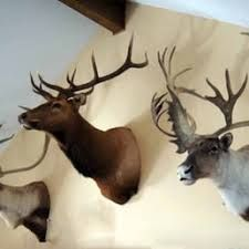 Nature's Way Taxidermy Inc Steger  Illinois