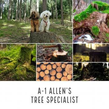 A-1 Allen's Tree Specialist Floral City Florida