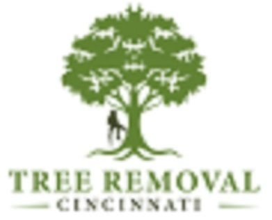 Tree Removal Cincinnati Cincinnati Ohio