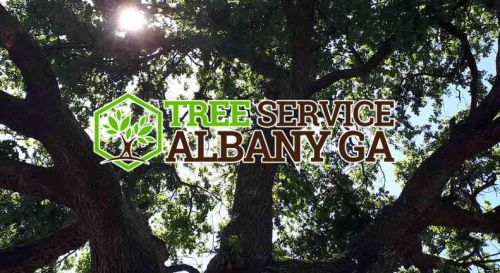A to Z Tree Care Albany Georgia