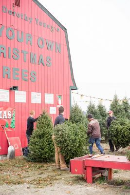 Carl and Dorothy Young's Cut Your Own Christmas Trees Yellow Springs Ohio