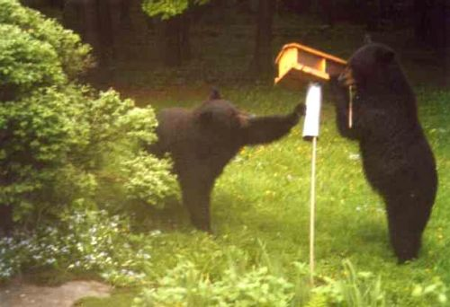 It's time to take down bird feeders to help keep bears out of trouble, according to Vermont Fish and Wildlife.