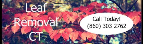 Indianapolis Leaf removal Service Indianapolis Indiana